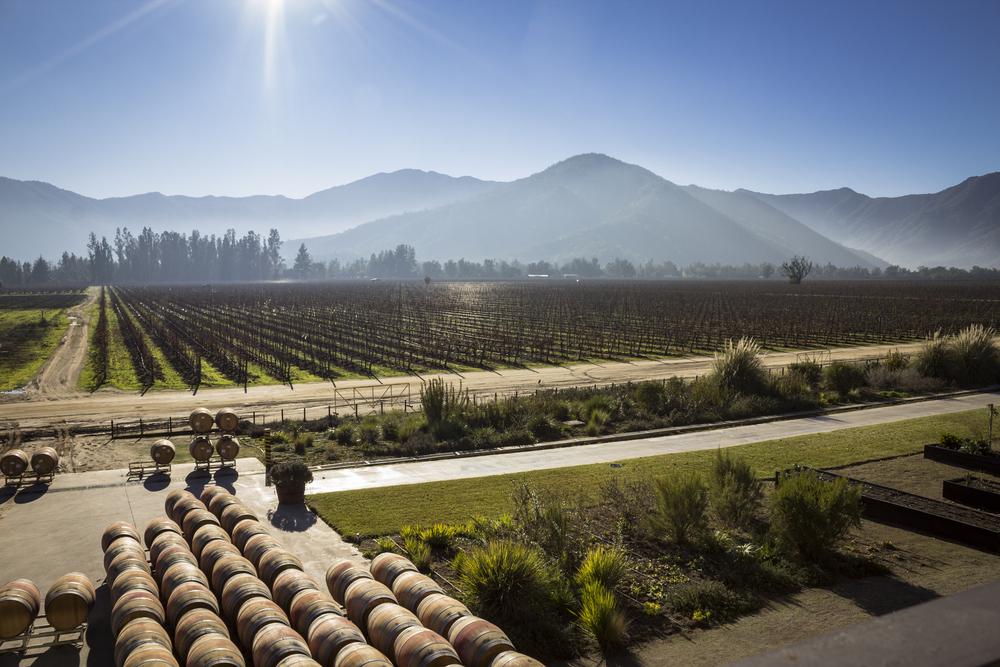 mercado de vinhos chilenos