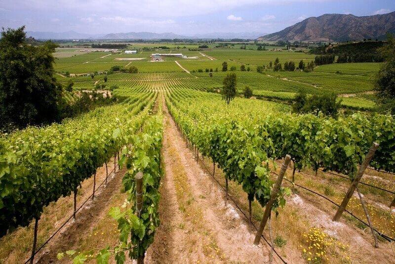 Regiões Vinícolas Chilenas: Valle Do Colchagua E Valle Del Maipo