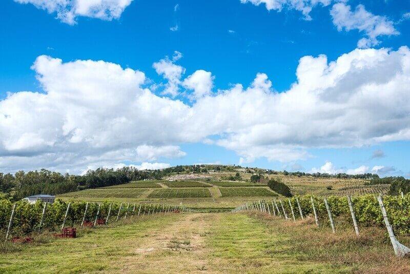 ClubeD: Descubra Os Vinhos Premium Do Uruguai