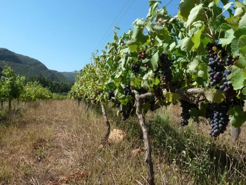 vinhos da áfrica do sul