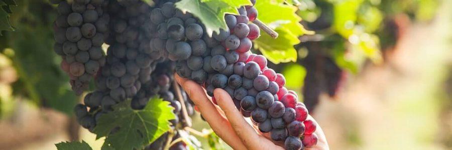 Guia Completo: Descubra O Que São Vinhos Naturebas