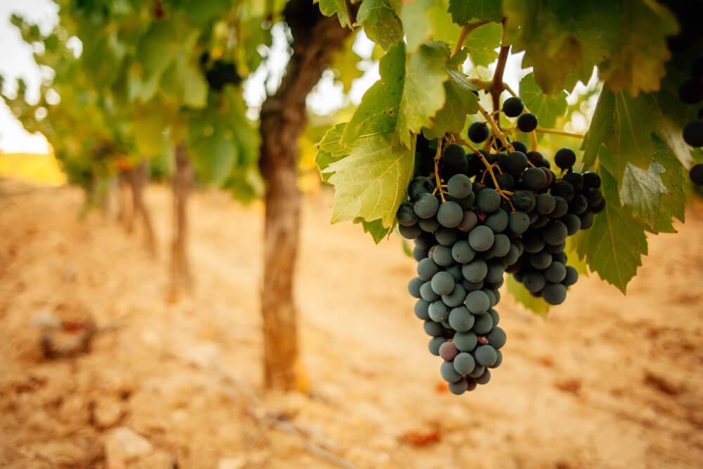 vinho natureba vinhos naturais