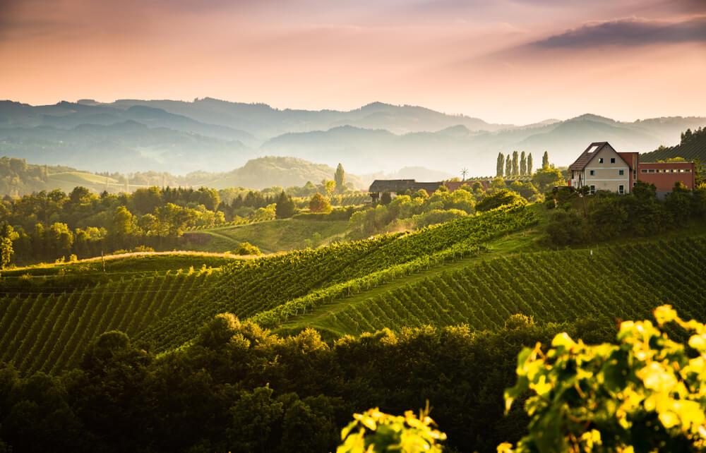 vinhos do velho mundo origem do termo