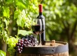 Vinho Merlot Francês
